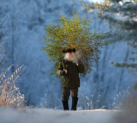 Рубить или не Рубить елку к Новому Году?