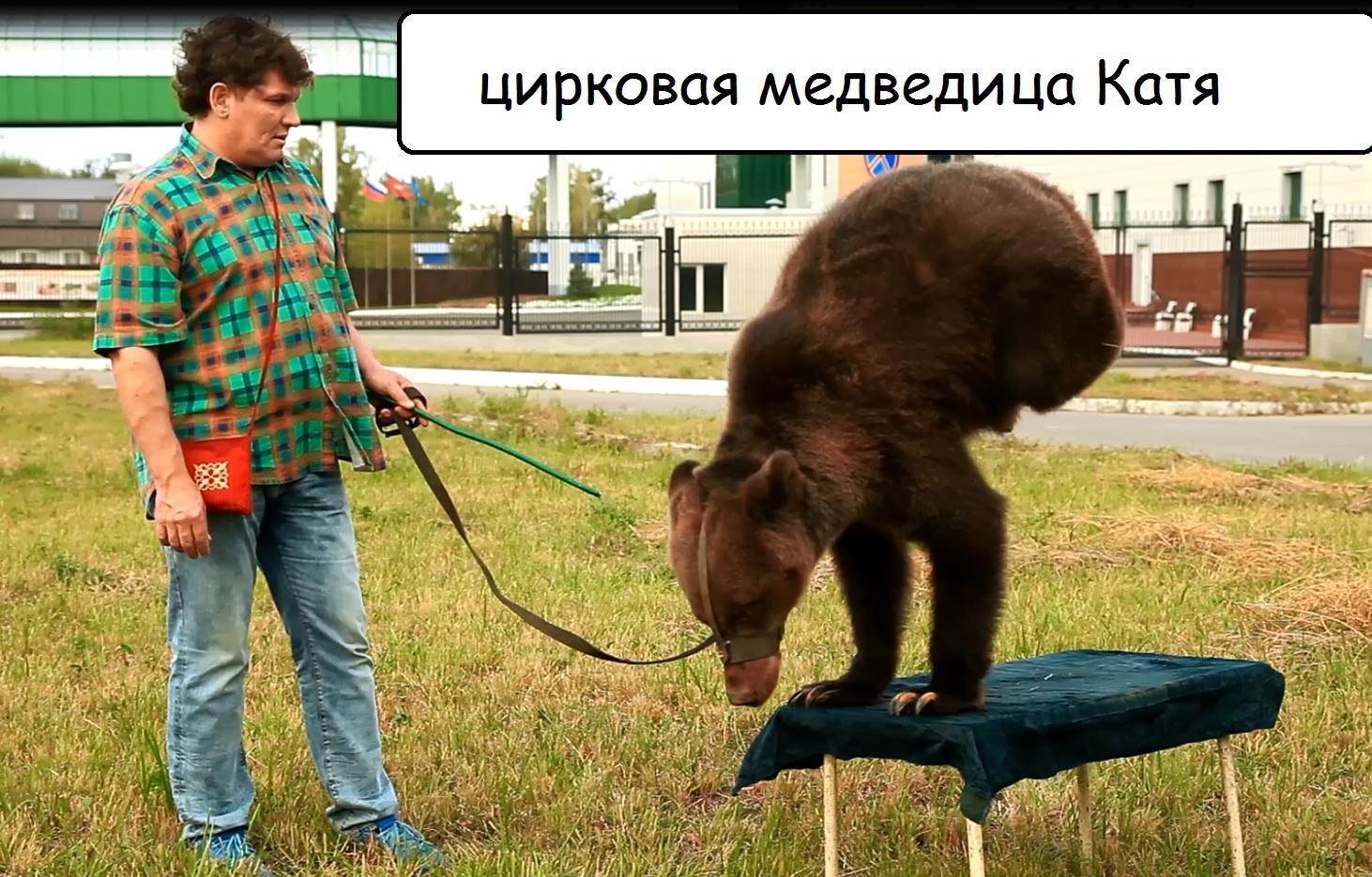 Порноактриса и цирковой медведь требуют правосудия от полиции